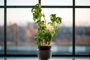 sunny window
